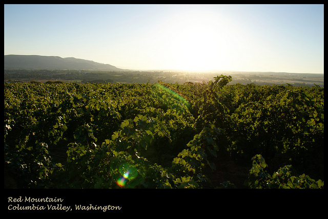 columbia-valley-vineyard
